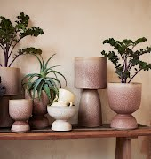 These gorgeous pots will zhuzh up even a slightly sad houseplant